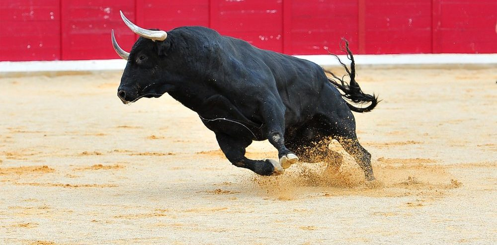 Bitcoin Bulls Stampede Past $3,700 & Wider Crypto Market Rallies with Them