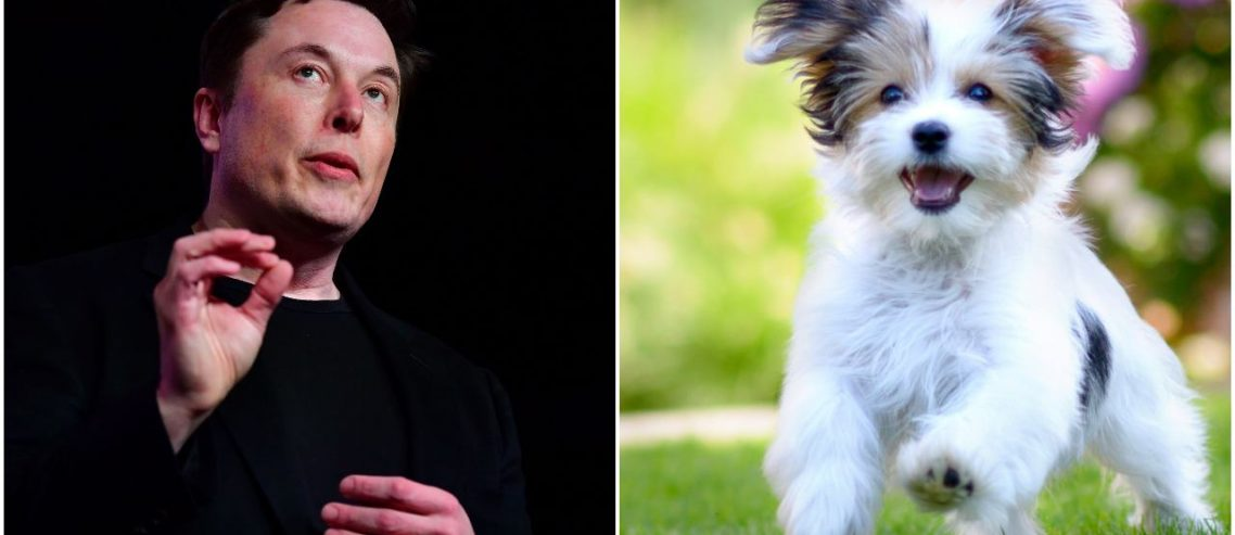 'C'mere Tesla!' Elon Musk Will Test Age-Old Dog Trick This Weekend