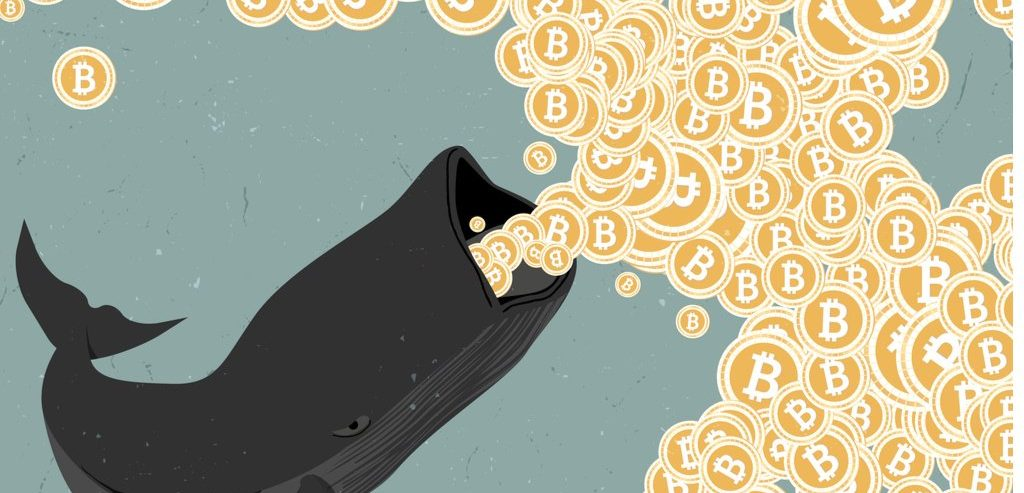 Bitcoin Whales Bought the F**king Dip: Research